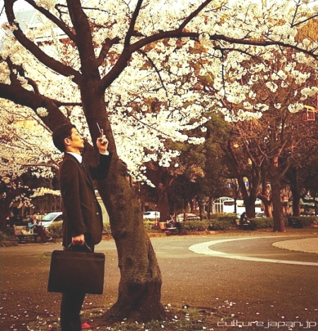a sarariman takes a photo of the cherry blossom